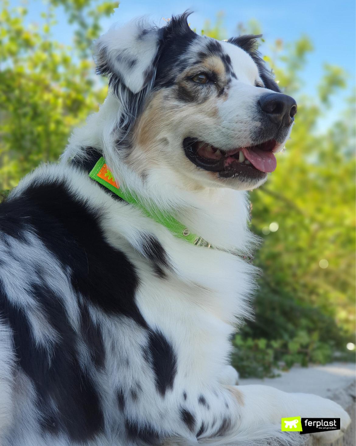 Como fazer cachorros felizes