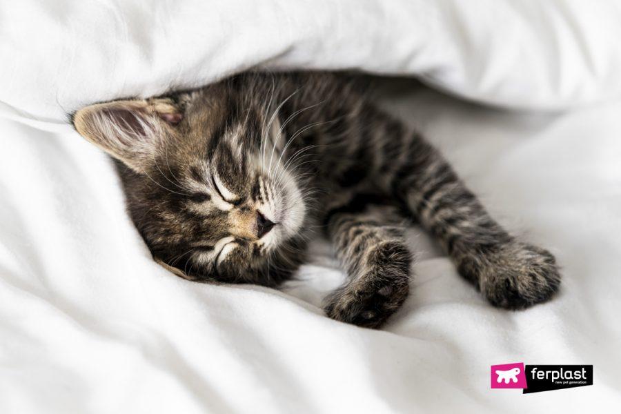 Mignon petit chaton endormi recouvert d'une couverture