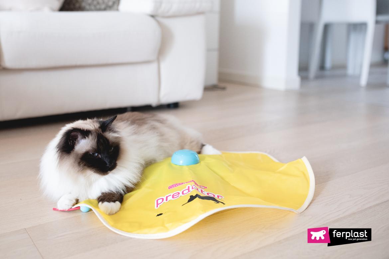 jeux pour chat vacances pour ne pas s'ennuyer