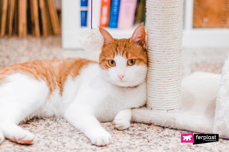 царапающий пост кошка рыжий белый настороженный