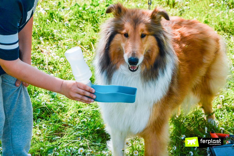 Cachorro está com sede quente verão garrafa água