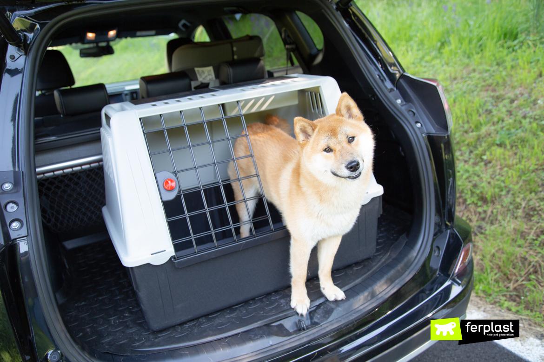 Esqueça viagem de férias carro cachorro