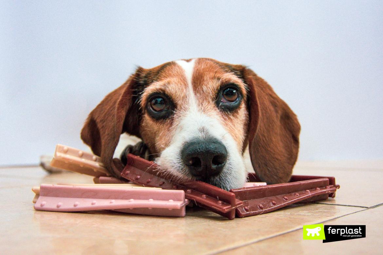 goodbite natural beagle ferplast chien heureux pour de nouveaux jeux  jouets à mâcher