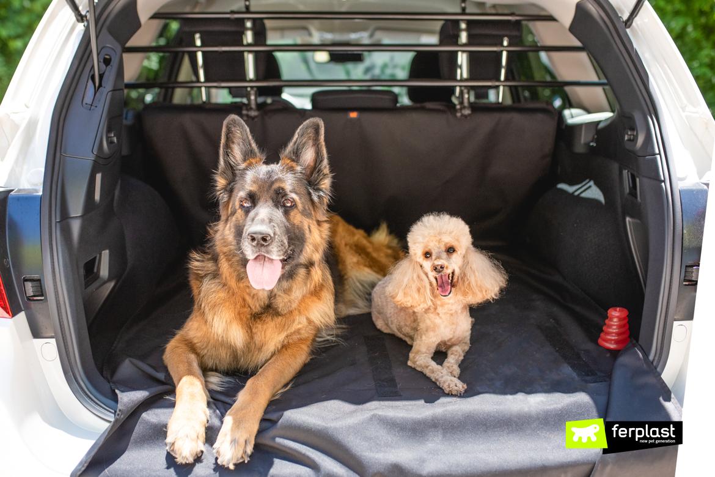 Traga cachorros de férias com segurança de carro
