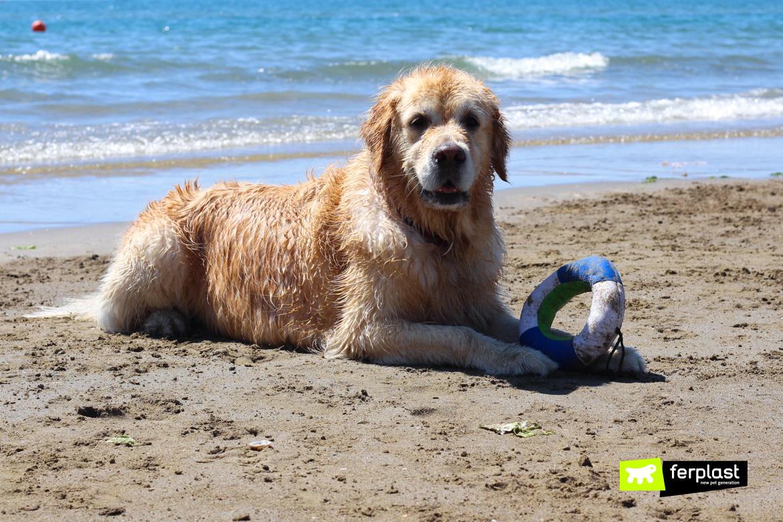 risco de cachorro na praia