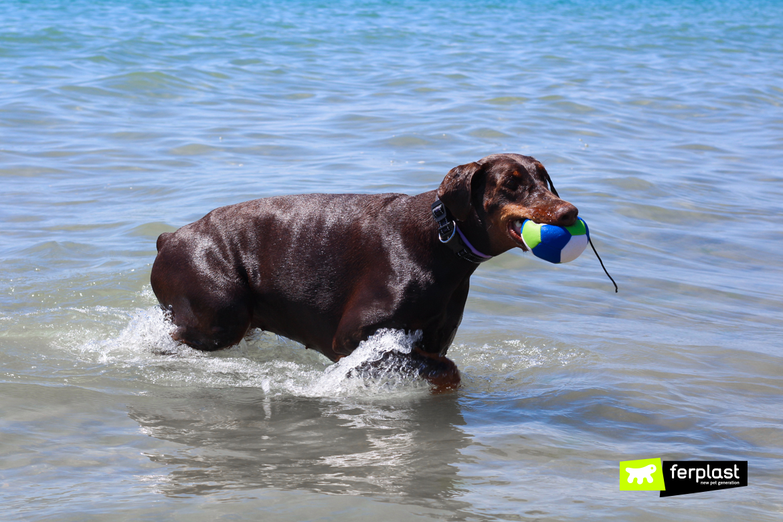 Férias com cão riscos