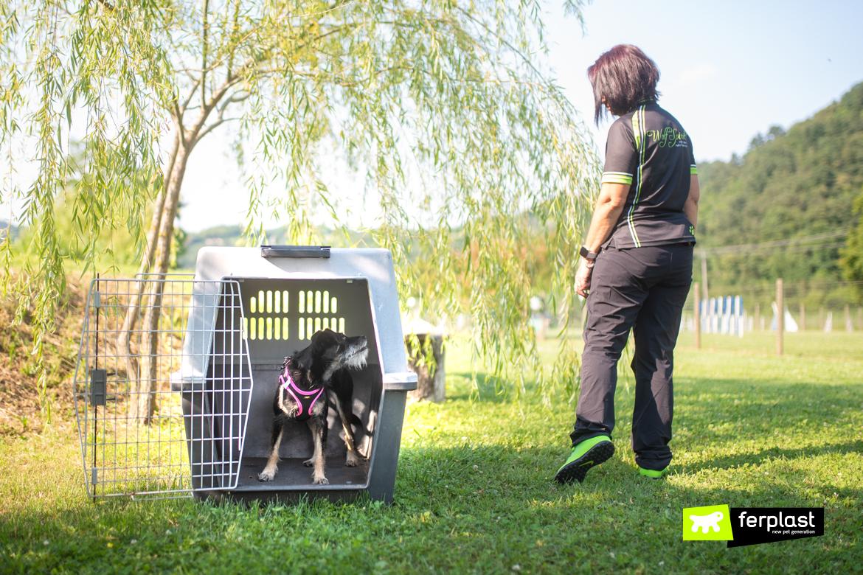 Меры предосторожности для разлуки тревоги одиночества собаки