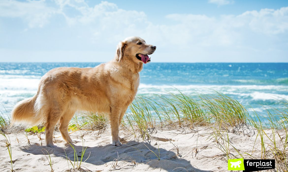 ON THE BEACH WITH YOUR DOG: WHAT PRECAUTIONS TO ADOPT?