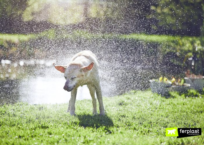 SUMMER IN THE CITY: HOW TO DEFEND AND REFRESH THE DOG!