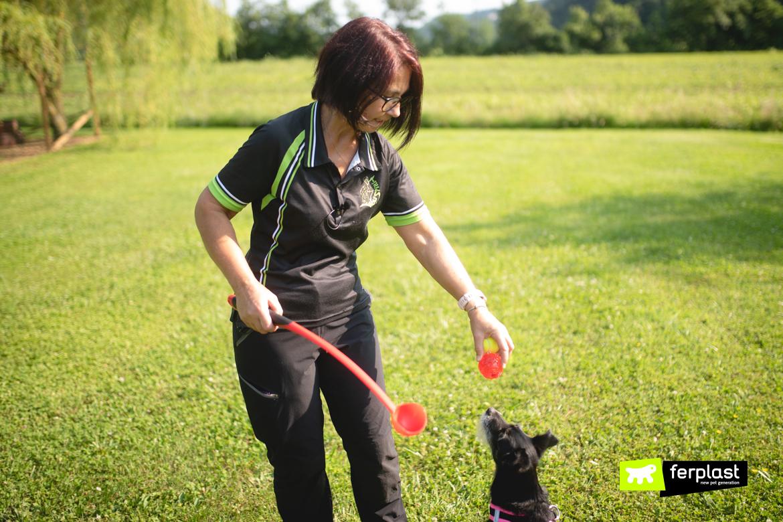 как утомить вашу собаку, прежде чем оставить его одного