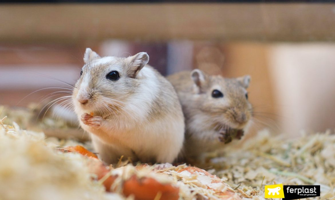 GERBIL HOME, GUIDE TO PURCHASE