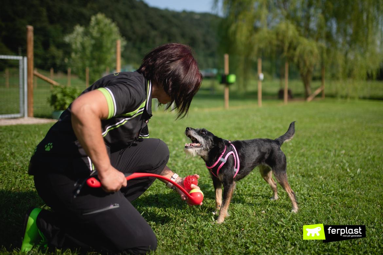 игры для собак на природе развлечения