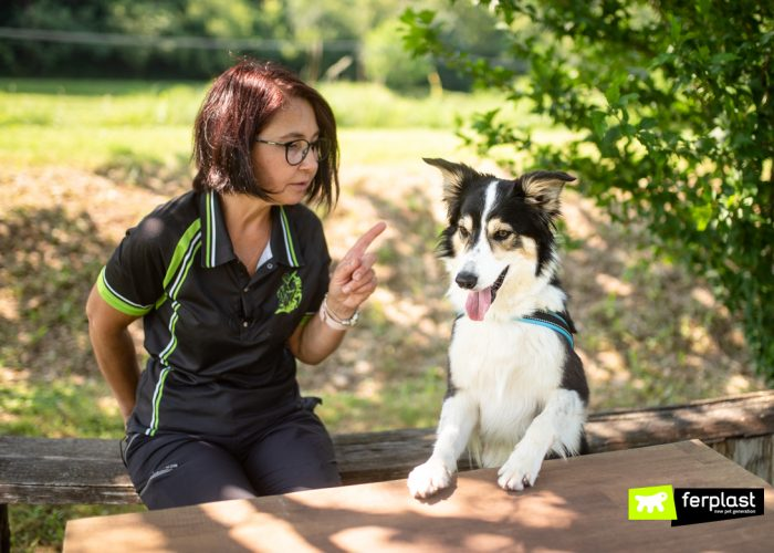 HOW TO DEAL WITH A BEGGING DOG, TIPS FROM A TRAINER