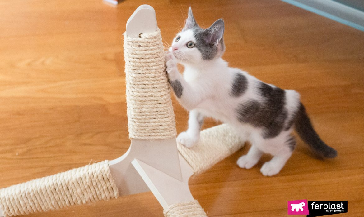 THE BEST TRAVELING CAT SCRATCHING POSTS