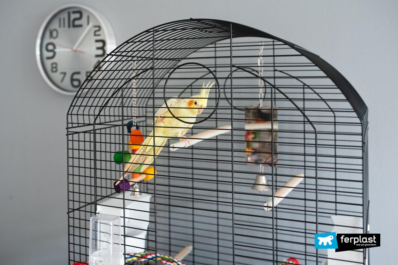 Корелла виды птица канарейка попугай маленькая птичка