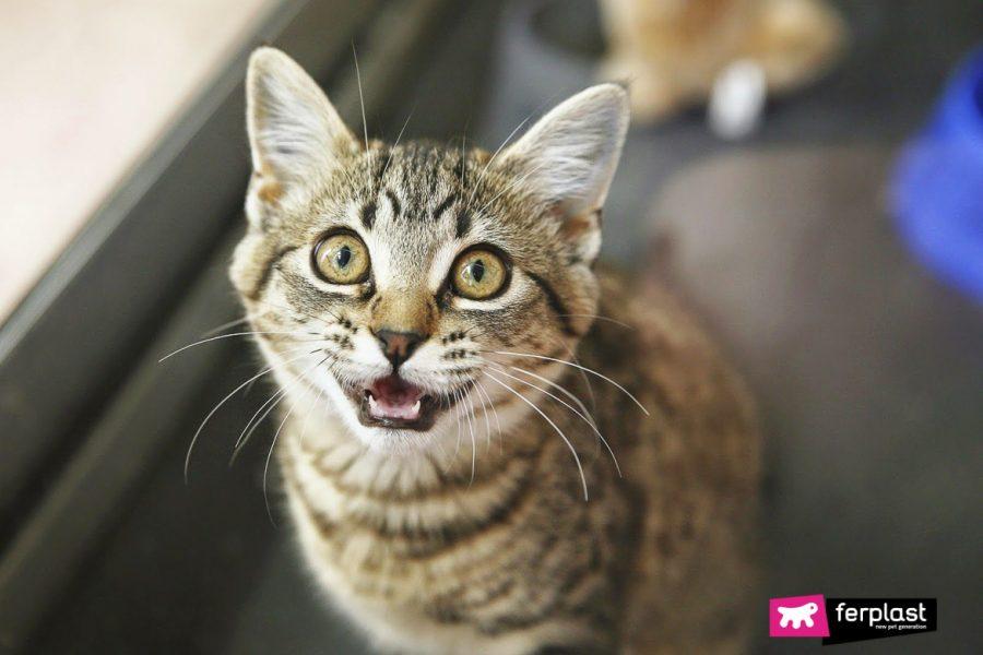 мотивы кошки мяу ферпласт