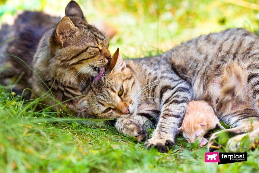 потому что кошки лижут друг друга