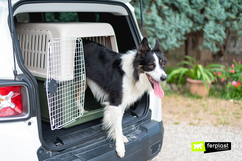 Собака боится машины потому что