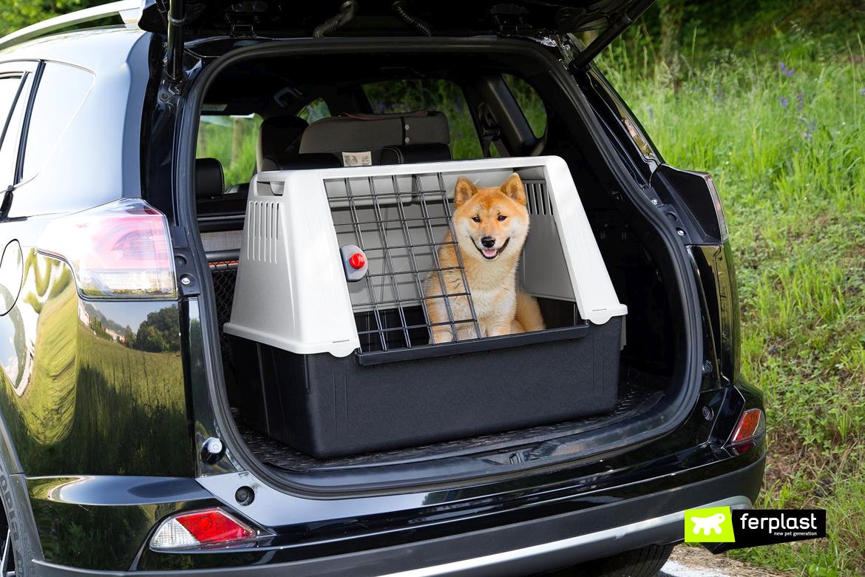 автовоз собака