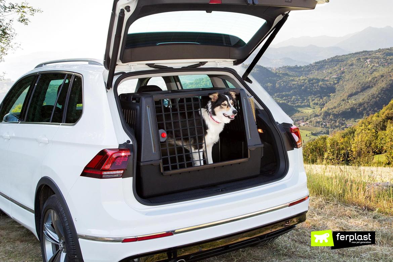 как научить собаку оставаться в машине