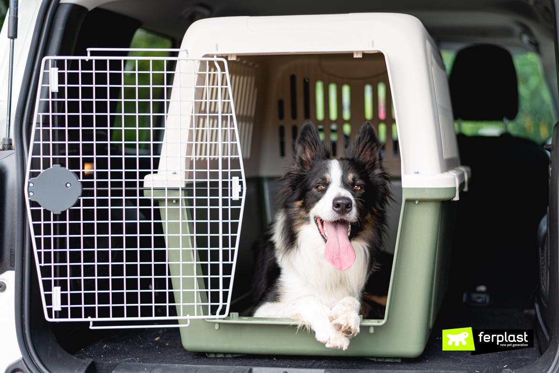 собака-перевозчик