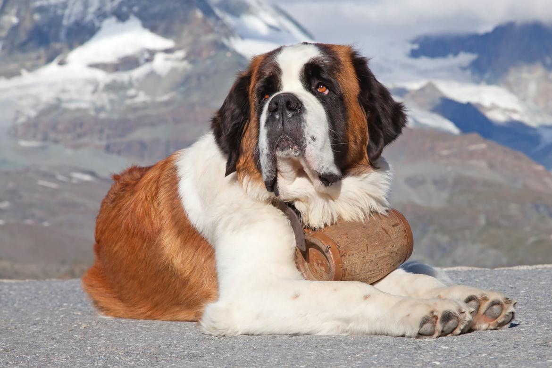 Beethoven chien acteur film 90s