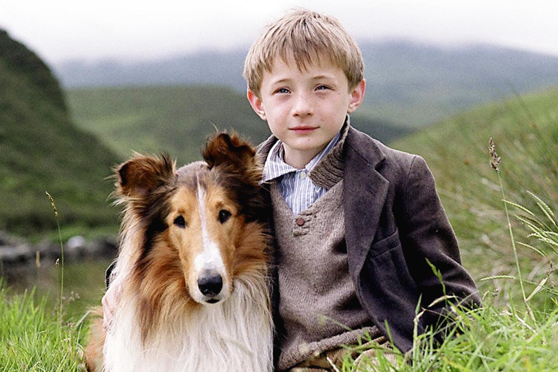 Lassie histoire des chiens acteurs cinema