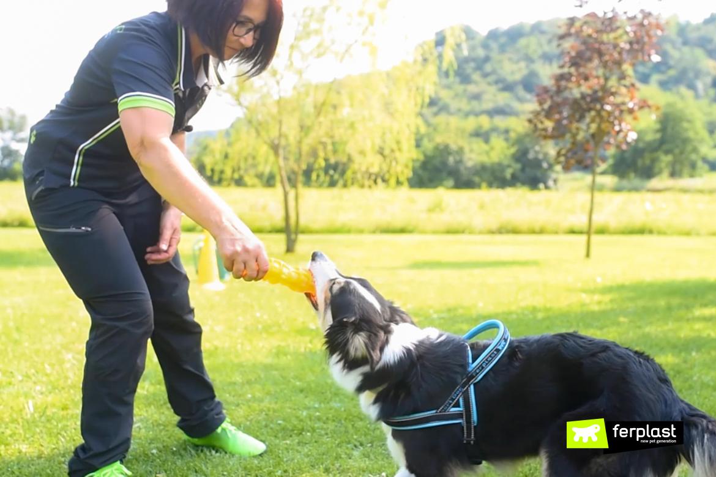 centre de formation chien canin