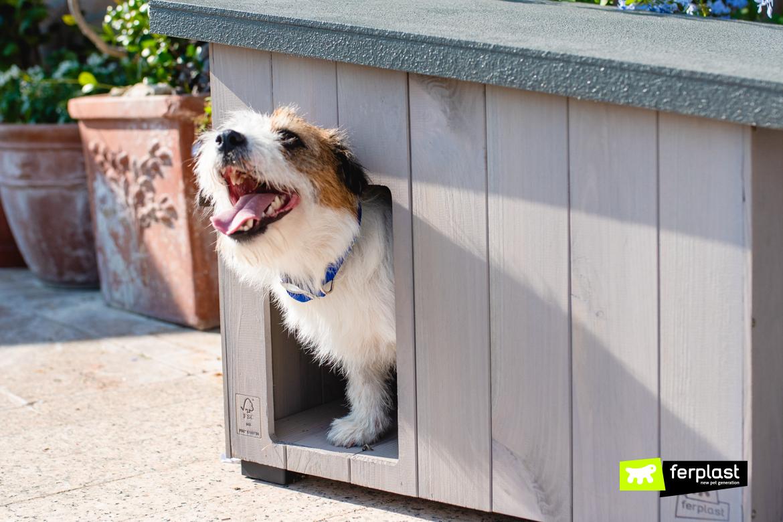 собака живет в саду