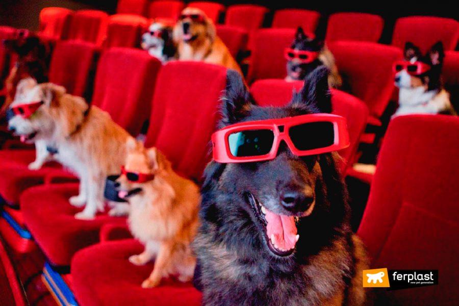 chiens célèbres acteurs