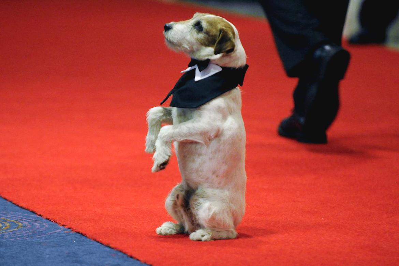 chiens célèbres films cinéma histoire