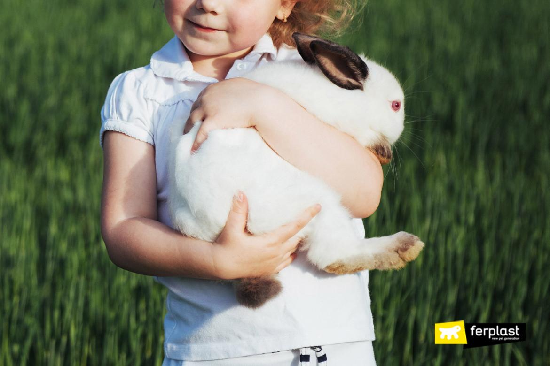 comment faire de la graisse de lapin