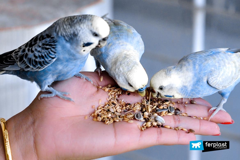 подсказки кормление попугаи