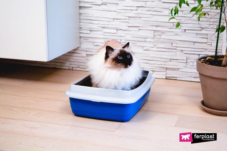 gato não usa caixa de areia