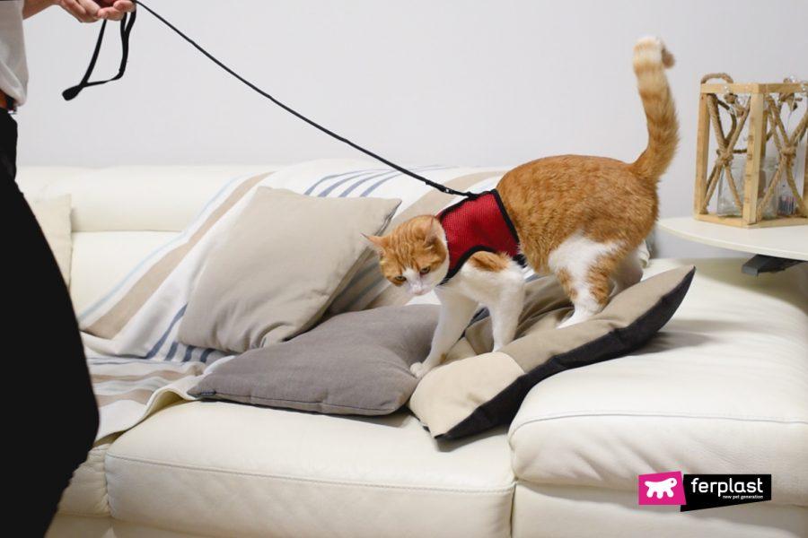 кошачья упряжь