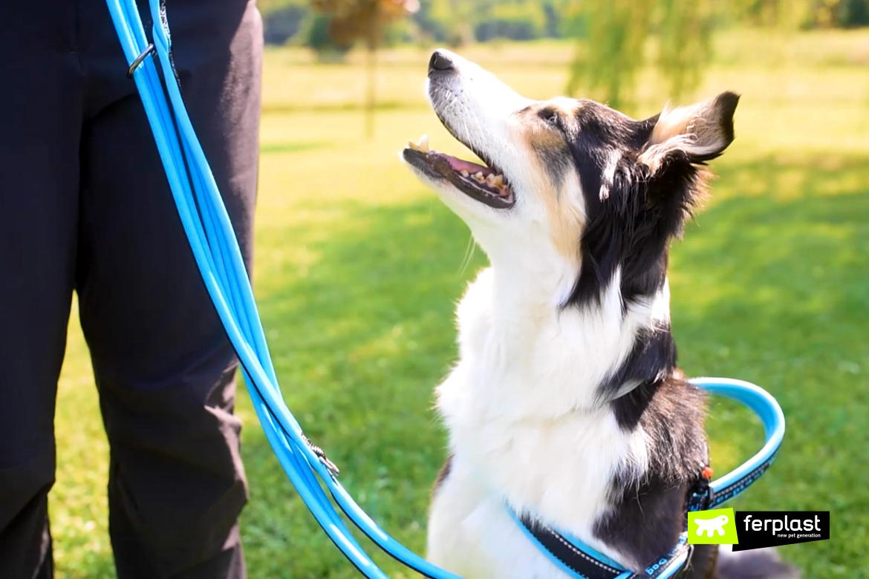 harnais laisse chien de sport ferplast