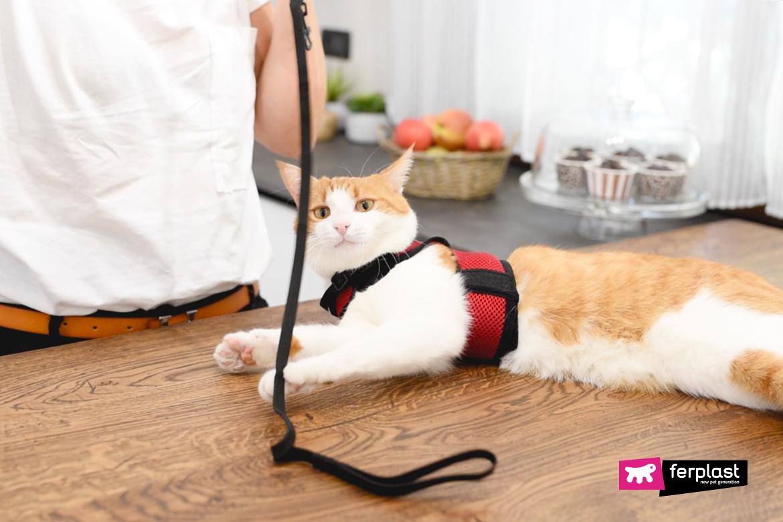 учить кошку использовать поводок