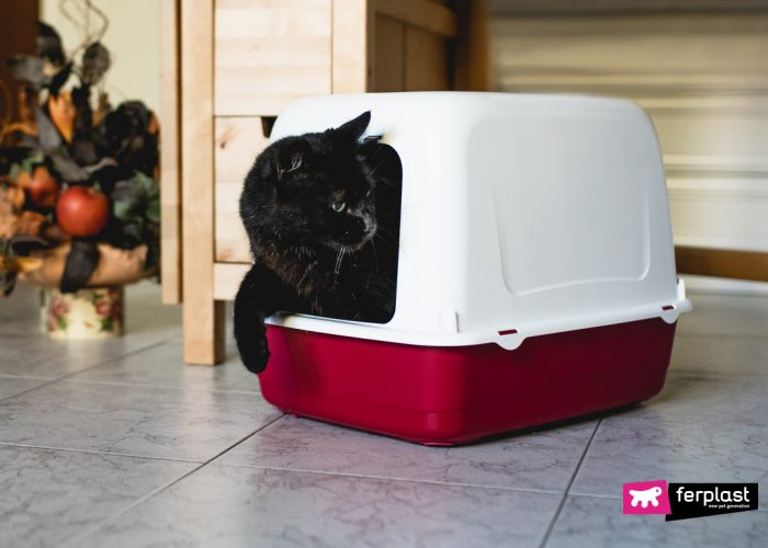 THE CAT NO LONGER USES THE LITTER, HOW TO RE-TRAIN HIM