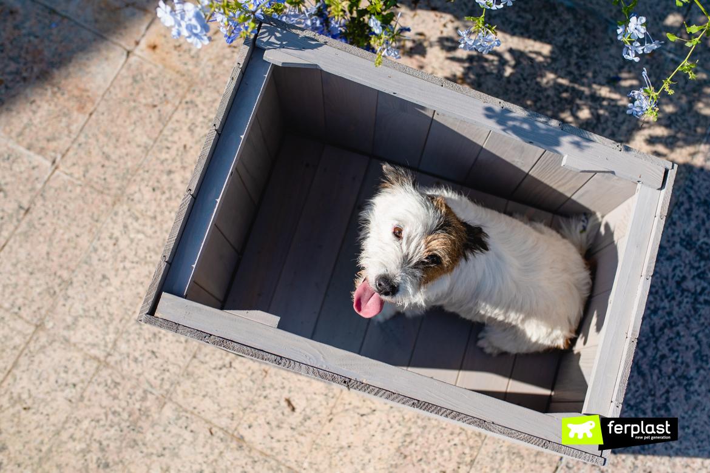 домик для собаки джек рассел терьера