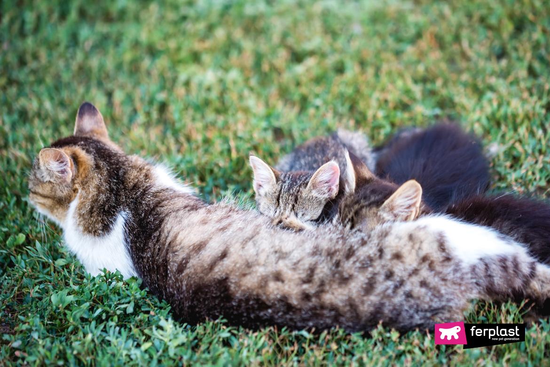 Мать кошка кормит своих котят детей на открытом воздухе