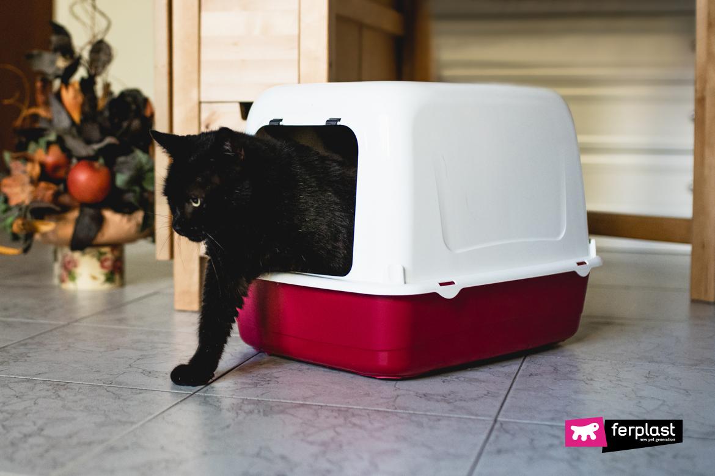 banheiro fechado para gatos ariel home ferplast