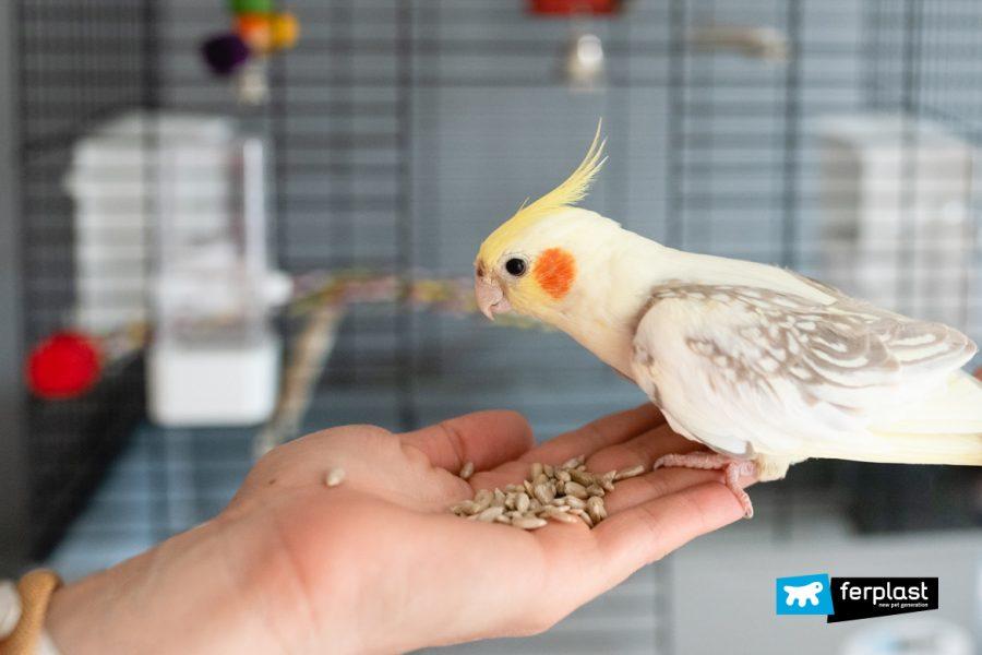 смесь семян для птиц, что есть