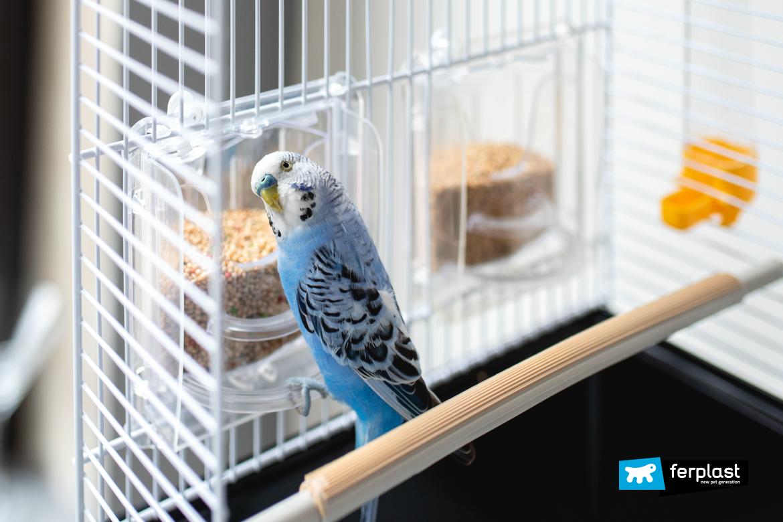диета для кормления попугаев