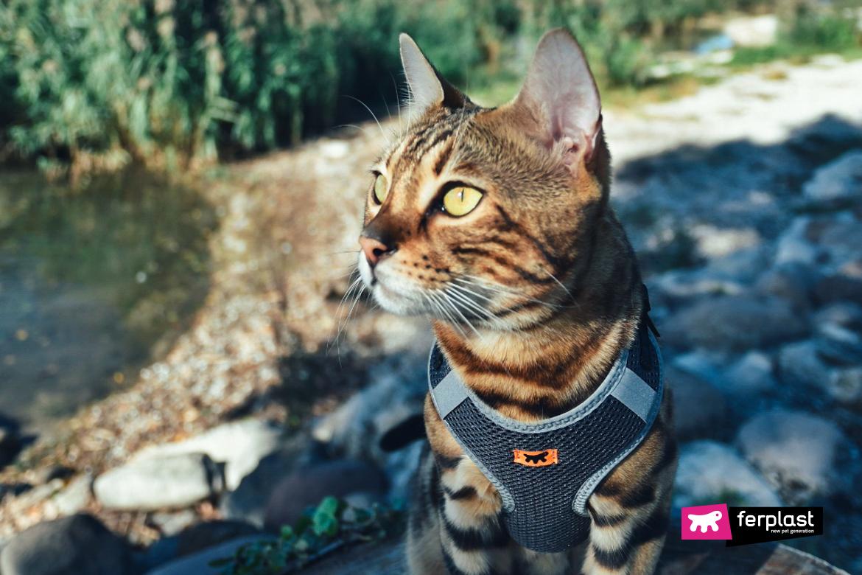 шлейка никита ферпласт для кошек