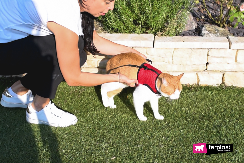 шлейка для кошек на покупку