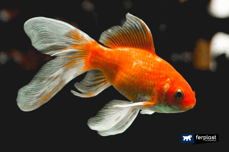 аквариум для золотой рыбки