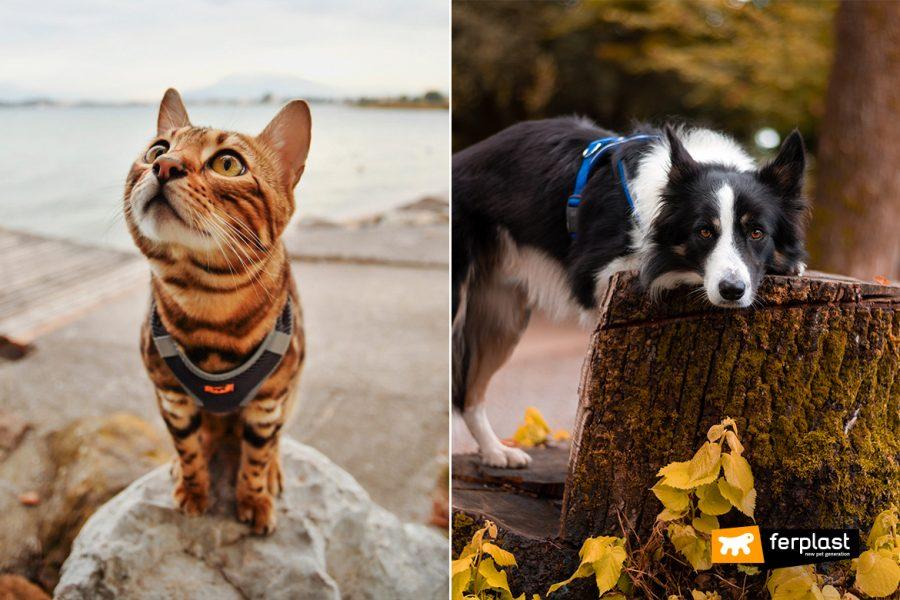 осень собака кошка