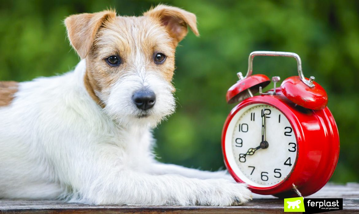 DO DOGS FEEL THE EFFECTS OF THE CHANGE OF HOUR?
