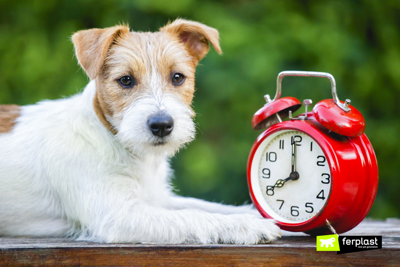 Собака смена час последствия
