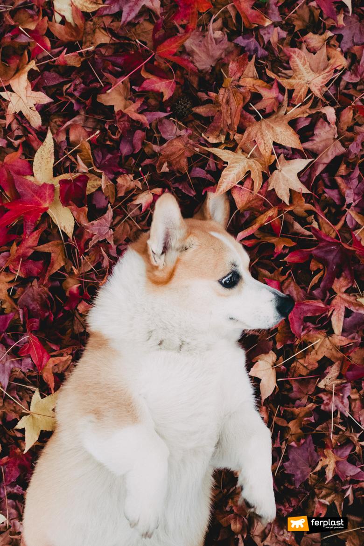 собака играет с листьями